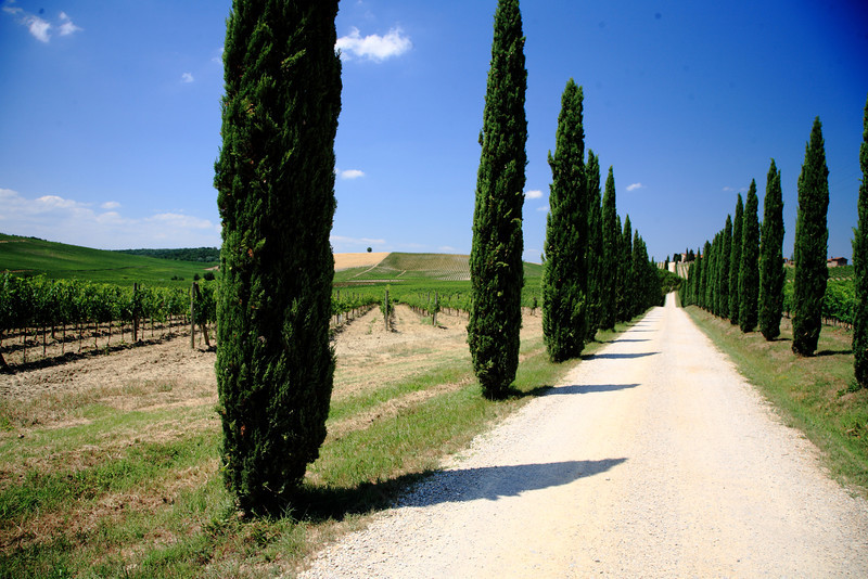 Entrance to a vineyard in Tuscany.