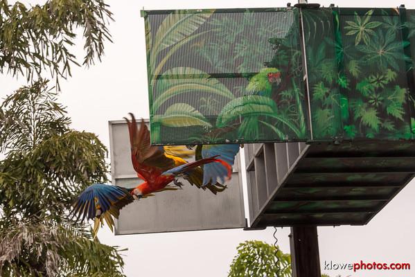 2015-08-01 San Diego Zoo