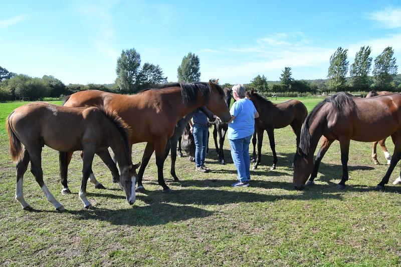 20190915 Ponies bij Jose GVW_4863.jpg