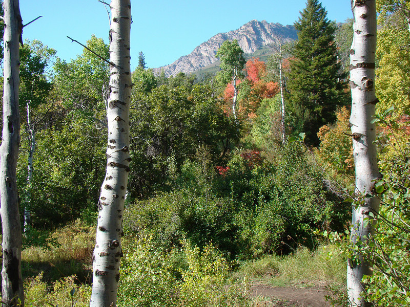 Maples and Aspen, Green Pond Trail