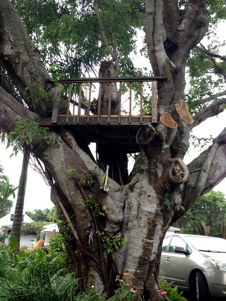 The treehouse survives.