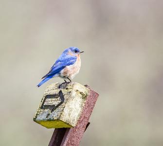 Central Indiana Birds 2013