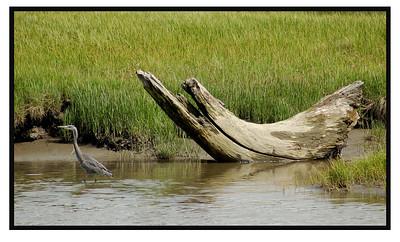 4-27-11 Samish River