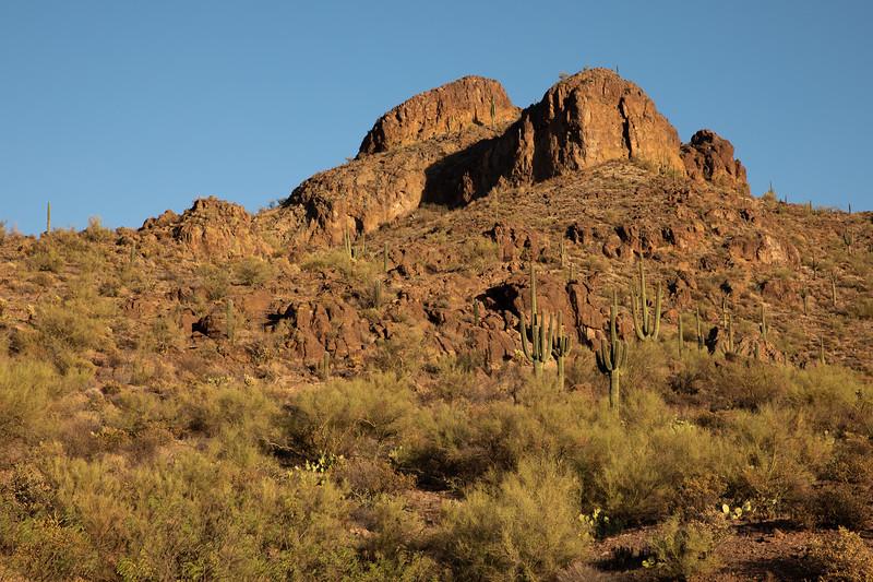 WVWS_Saguaro Cactus-3808.jpg
