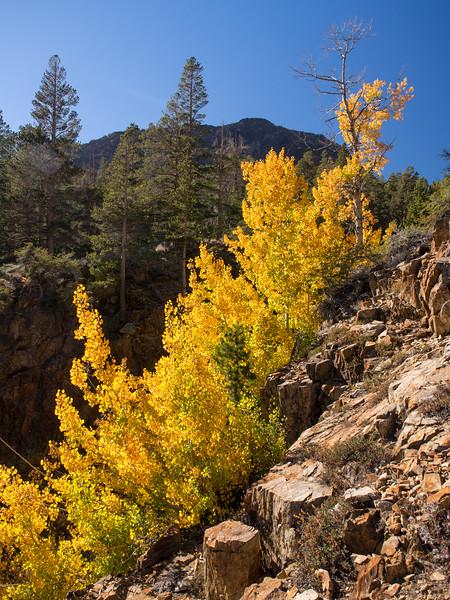 Warren Canyon