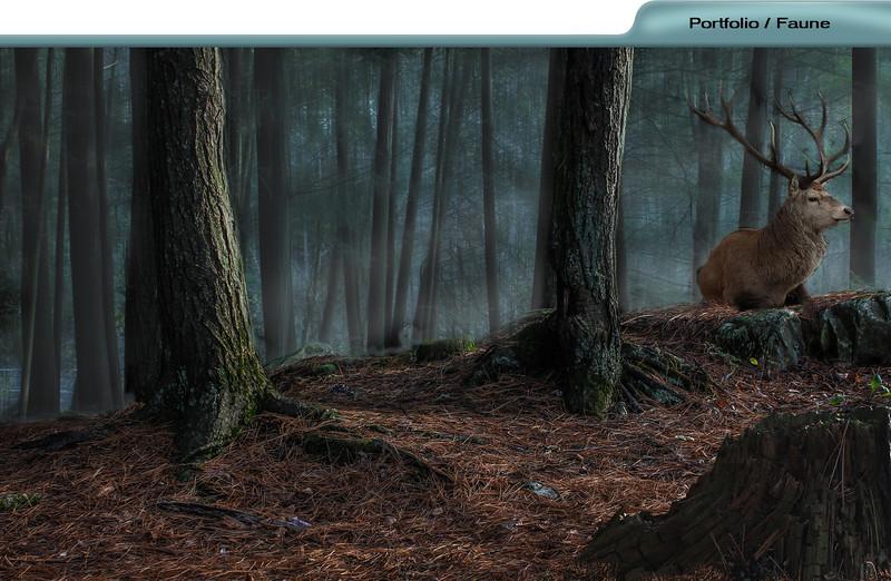 faune-portfolios.jpg