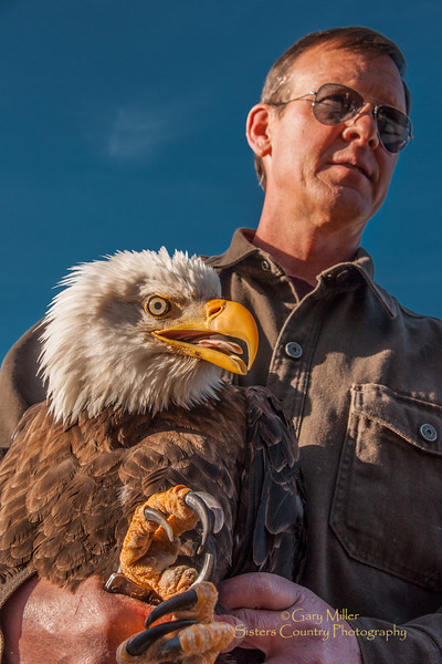 Bald Eagle Release 2012