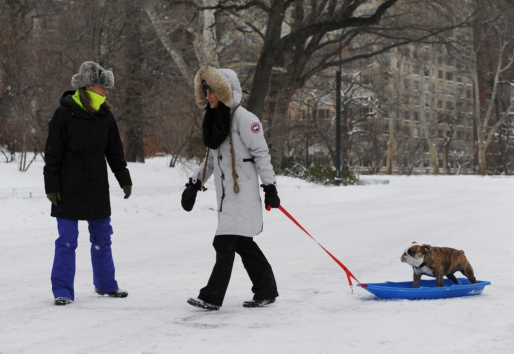 . Tara Ferraro (C) pulls Chunk, an English Bulldog, on a plastic sled through Central Park after a snowstorm hit New York January 27, 2015. AFP PHOTO/Stan HONDA /AFP/Getty Images