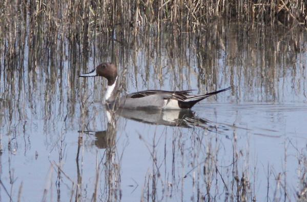 South Bay - birding - 2018