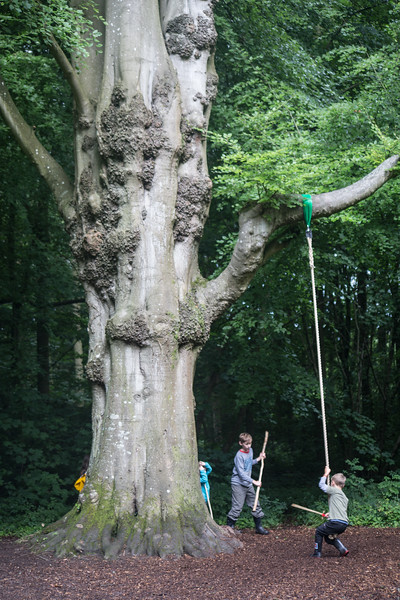 The Beech Tree.jpg