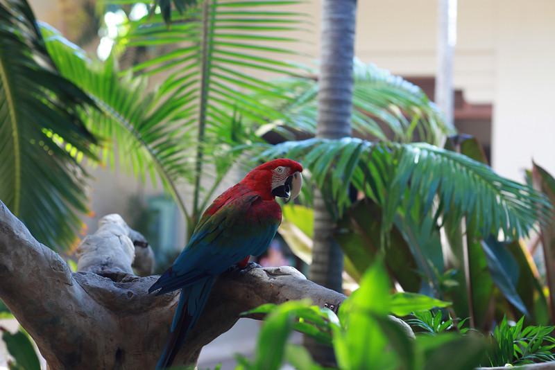 Kauai_D5_AM 196.jpg