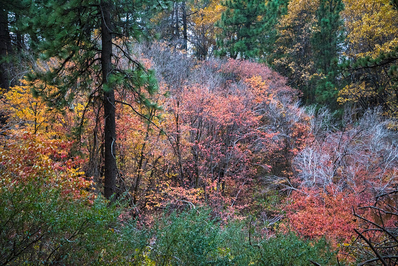 San_Bernardino_Mountains_Fall_Color_Trees_DSC3287.jpg