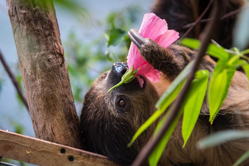 Sloth Flower.jpg