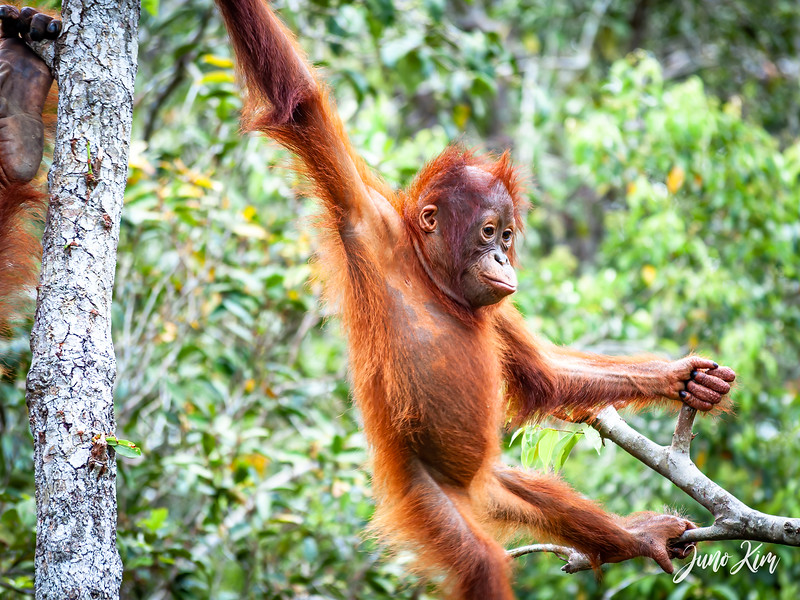 2012.10.07_Borneo_DSC_7143-Edit-Juno Kim.jpg