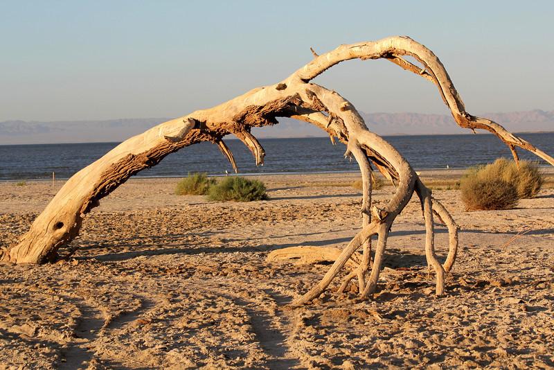 04 The Salton sea (77).JPG