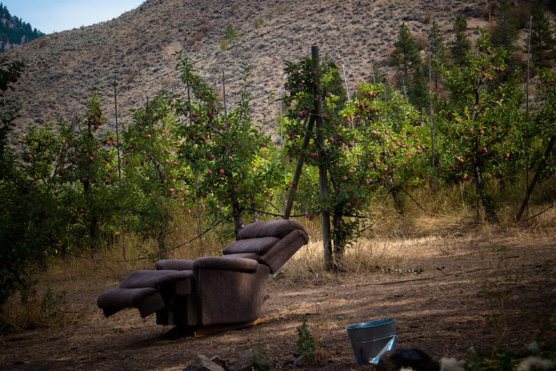 forbidden fruit chair in orchard.jpg