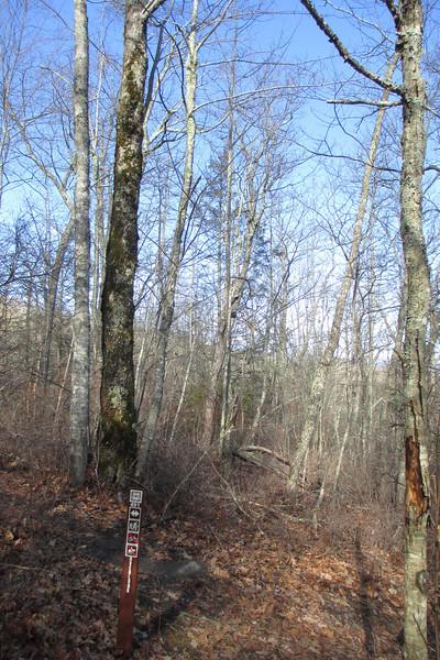 Carlton's Way-Overlook Trail Junction