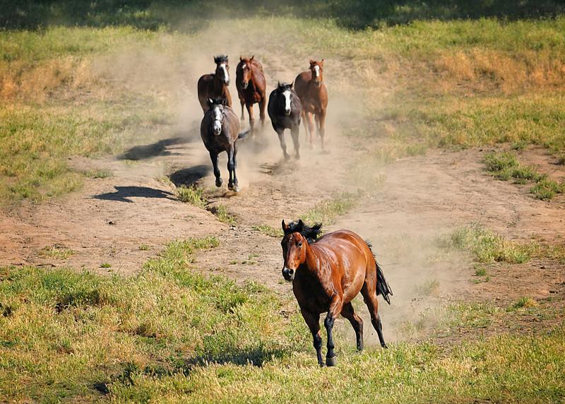 Fairlea Ranch 2012