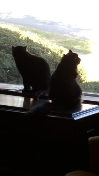 Kitty Proximity Amert...