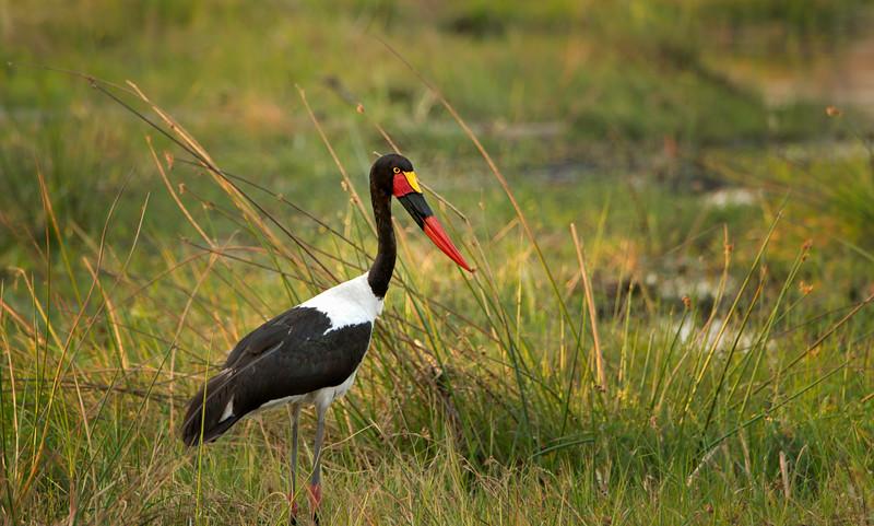 2014-08Aug-Okavango Masters-85-Edit.jpg