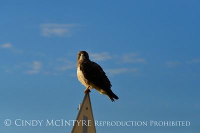Hawks-Falcons