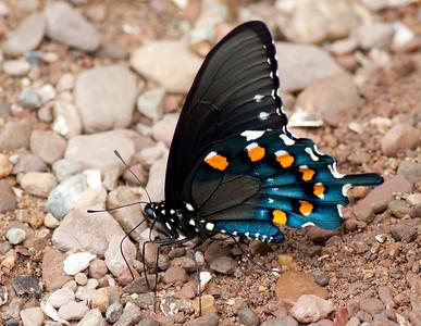 Insects, Invertebrates