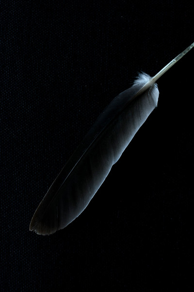 Feather 2441 2.jpg