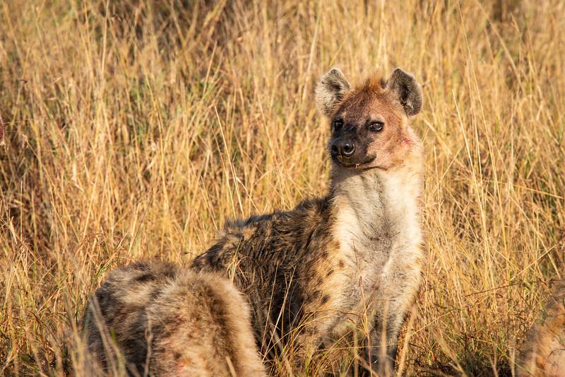 Hyena 2 (1 of 1).jpg