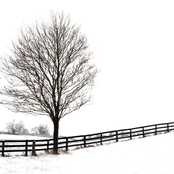 coaster tree winter.jpg