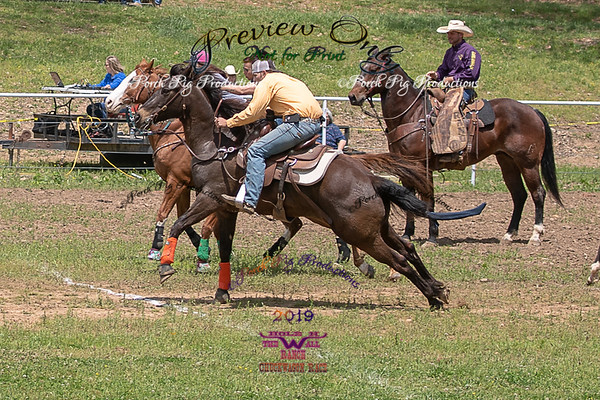 Horse Race upload