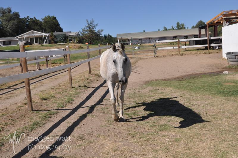 EB&Horses-067.jpg