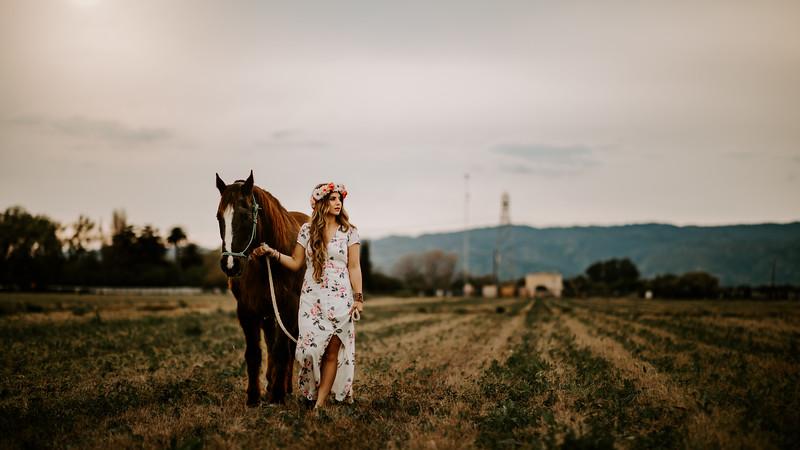 horsey-193.jpg