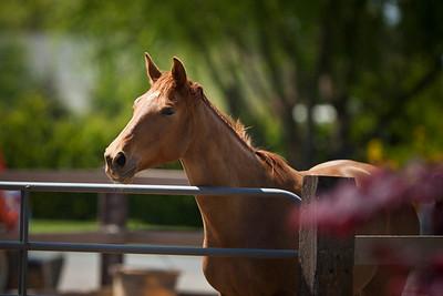 Lauren and her horse 04/06/2012