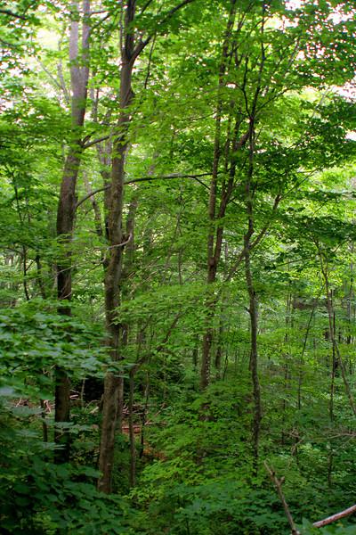 6834 Green trees.jpg