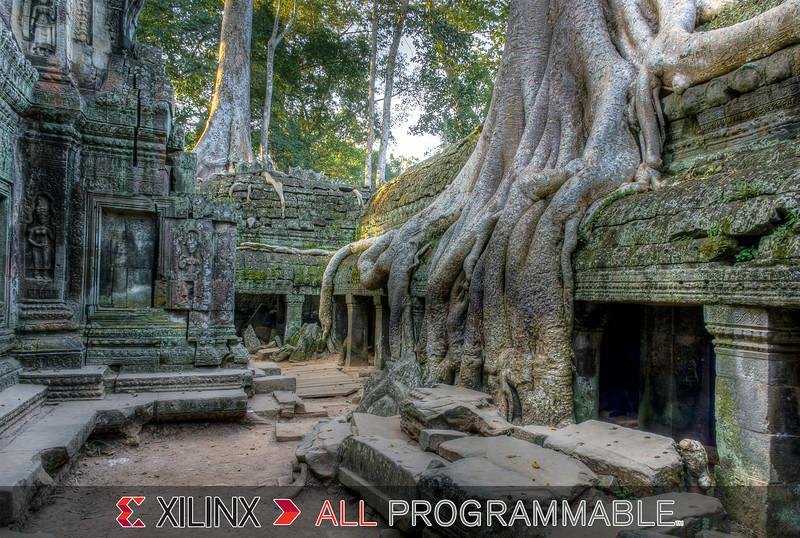 2079-XILINX-Jungle.jpg