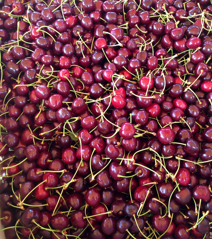 . Freshly picked cherries get ready for transport at Luebber Orchards in Wenatchee.  (Photo by Francie Swidler/The Denver Post)
