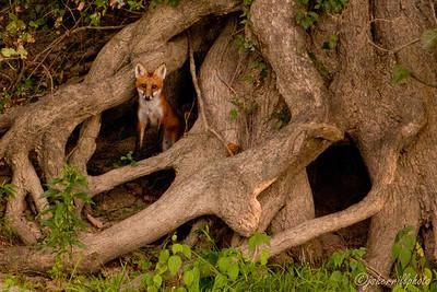 Animals Along the Potomac