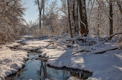 Fontenelle Forest February 6 2012