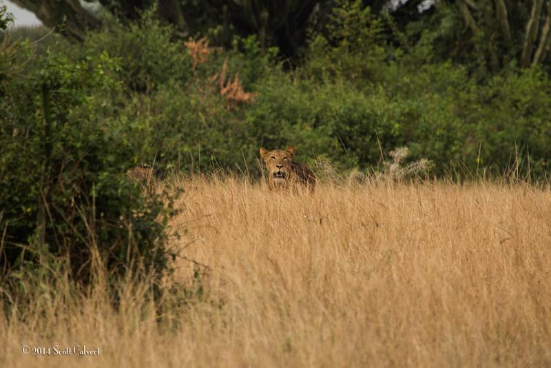 Lions Queen Elizabeth - S-5.jpg