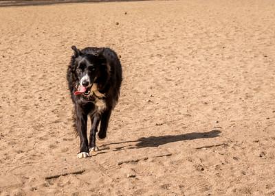 NEX-3N-Test pix at the dog park & Lake Murray