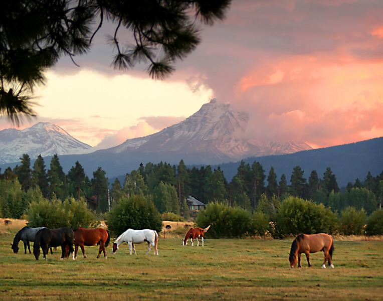 horses sunset 11x14 at 350dpi copy.jpg