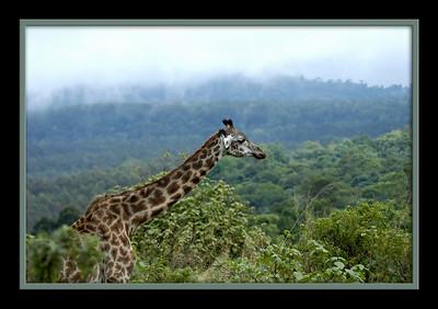 Skip's Africa Safari