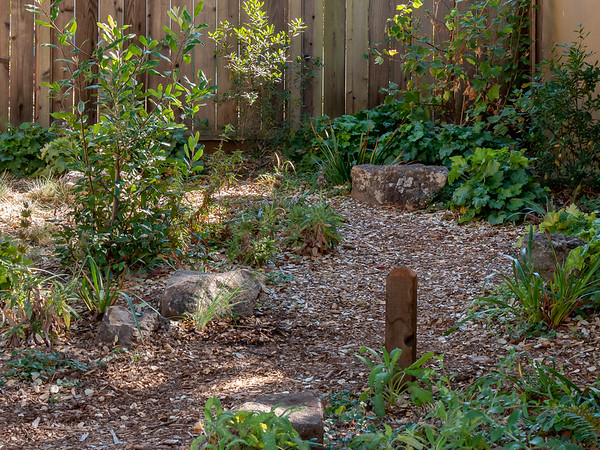 "27 October 2017.  Back to the path.  That new post a hose guide.  (It also helps define the edge of the path.)  New Salvia by the post.  Not too the new California fescue by the rocks opposite the post.  This too helps define the path and ""push"" it right a bit, making it feel a little more curvy."