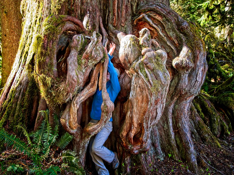 Beware the Ents of the Lewis River.