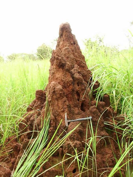 termiteira Muchan