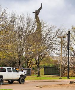 02_Dallas Zoo
