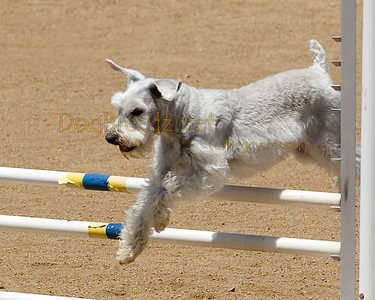 Jumpers Elite Round 2 - 12 inch