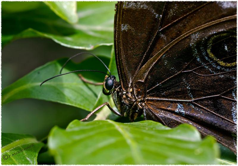 butterflycloseup.jpg
