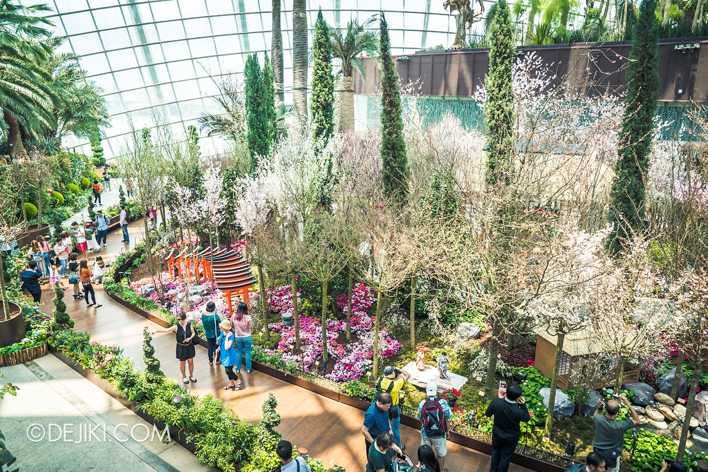 Gardens by the Bay - Sakura Matsuri 2018 floral display - flower field back overview