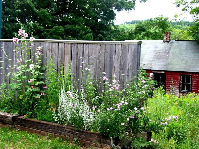 liberty flowers adj.jpg